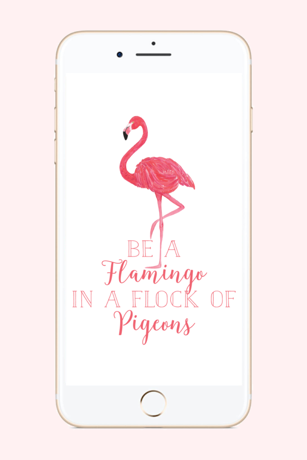 Be a Flamingo Phone Background
